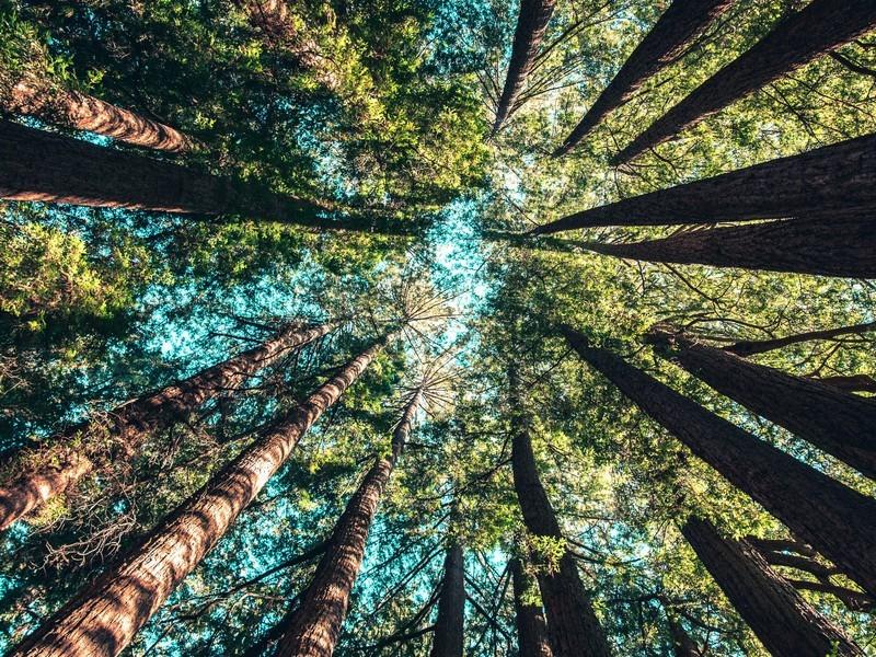 Les arbres, une leçon de vie au travail