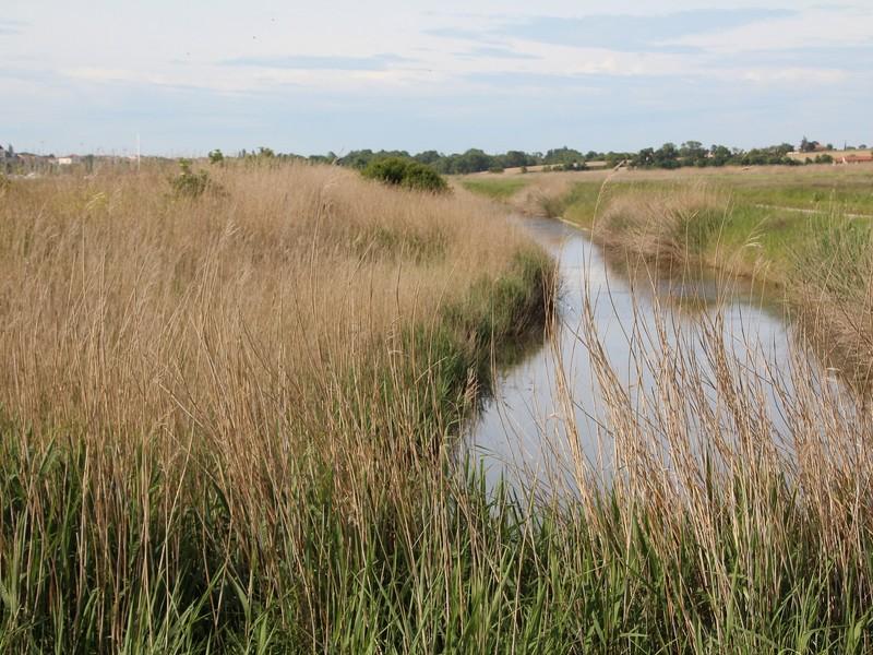 Le marais, un écosystème d'une richesse incroyable