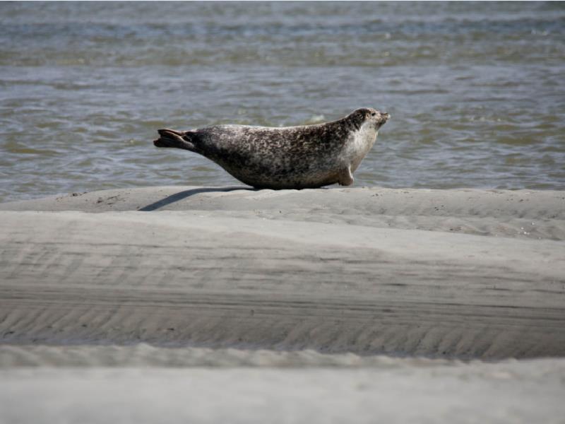 Séjour CE Rencontre des phoques dans la Baie de Somme