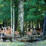 Séminaire Environnement et survie à Rambouillet