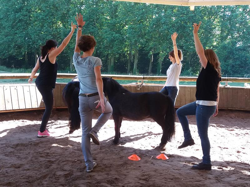 team building nature : Cheval et communication