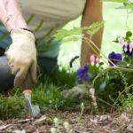 team building ecoresponsable et solidaire en forêt
