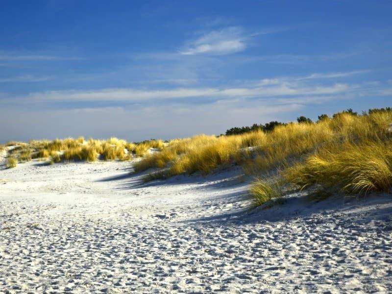 Team building éco-responsable : les dunes