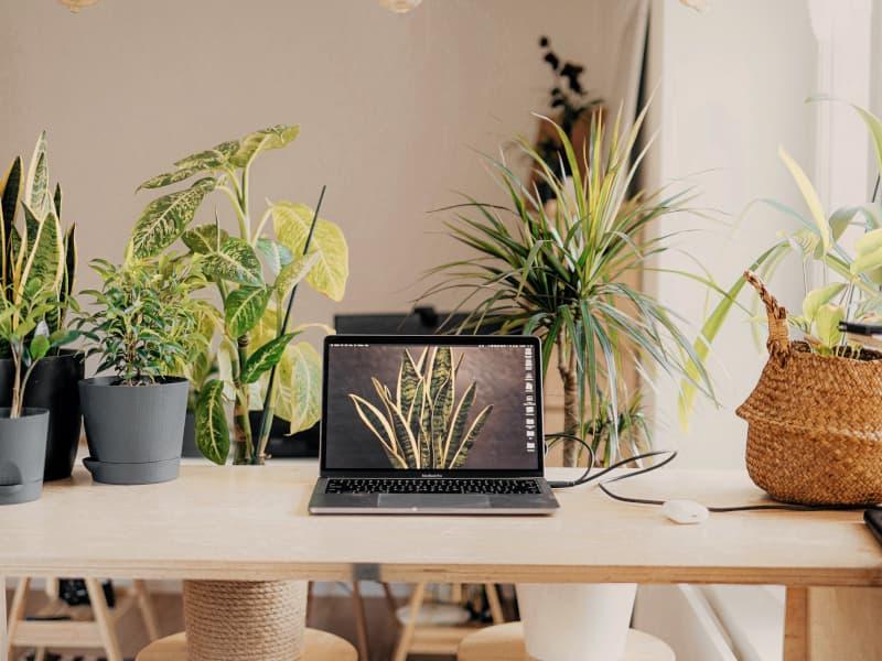F.A.Q : Le team building digital avec Connexion Nature