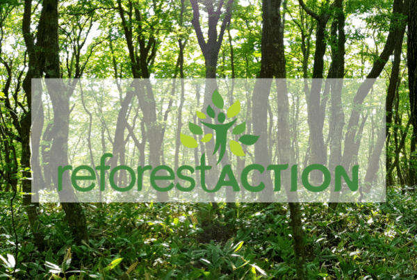 team building digital reforest'action
