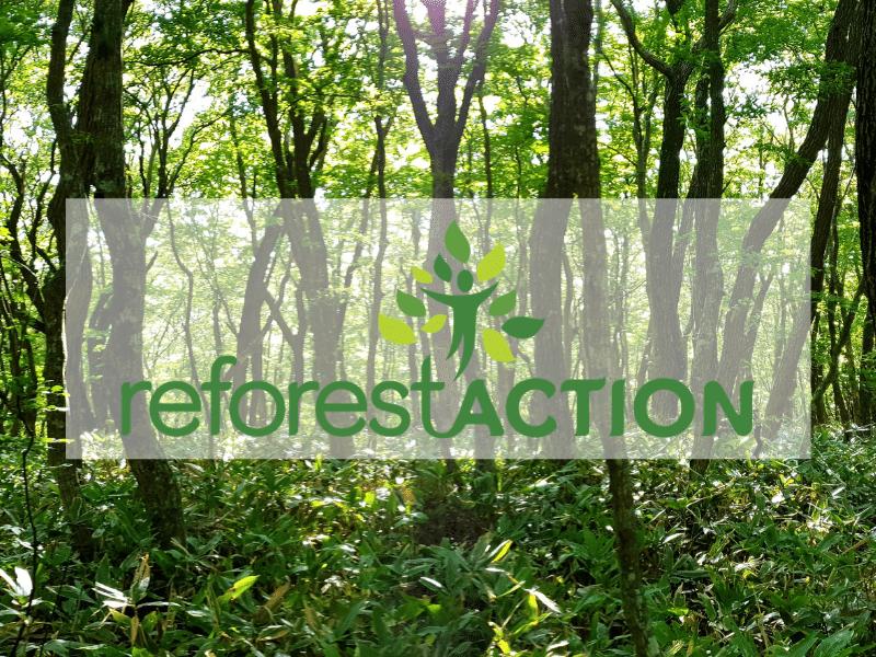 Nos team building à distance dans le Mag de Reforest'action